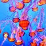 トロントの観光スポット -水族館-